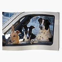 Cute Birthday Well Friend Three Best Mans Dogs Get Happy El mejor y más nuevo póster para la sala de decoración del hogar de arte de pared