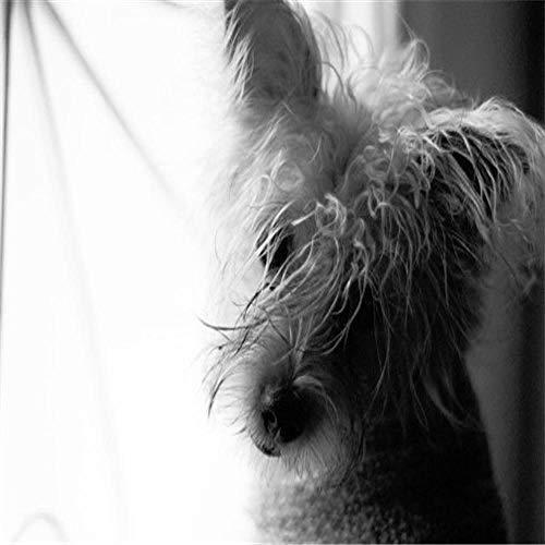 Pintura de diamante 5D taladro completo colorido lindo perro Schnauzer animal animal doméstico decoración bordado carácter mosaico fabricación