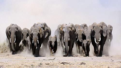 Puzzle 1000 Piezas Para Adultos De Madera Niño Rompecabezas Grupo De Elefantes En El Polvo. Juego Casual De Arte Diy Juguetes Regalo Interesantes Amigo Familiar Adecuado