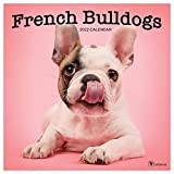 TF PUBLISHING - 2022 French Bulldogs Wall Calendar - Home and Office Organizer - Large Monthly Grid for Plans and Schedules - 4 Bonus Months - 12