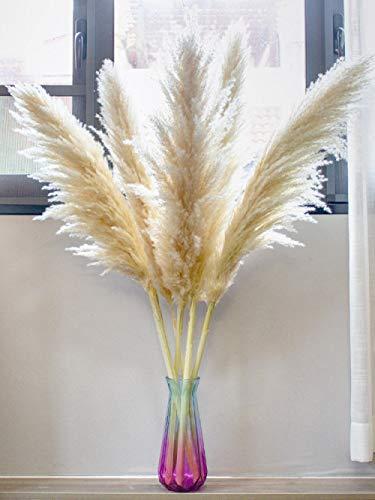 MEETFUN 5 uds, Decoración de Hierba de Pampas Naturales, Flor de caña, decoración Familiar,...