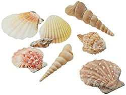 Mixed Beach Seashells