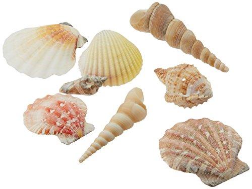 Creative Hobbies Sea Shells Mixed Beach Seashells - Various Sizes up to 2 Shells -Bag of Approx. 50 Seashells