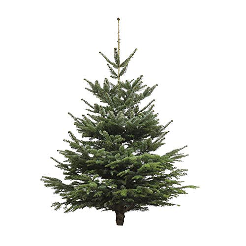 Echter Weihnachtsbaum - Nordmanntanne - frisch geschlagen Christbaum Tannenbaum (Tanne, 180-200 cm)