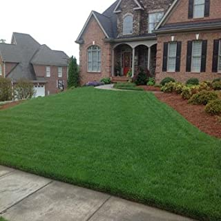 Outsidepride Combat Extreme Turf Type Fescue Grass Seed & Hybrid Bluegrass For Southern Zone - 5 LB