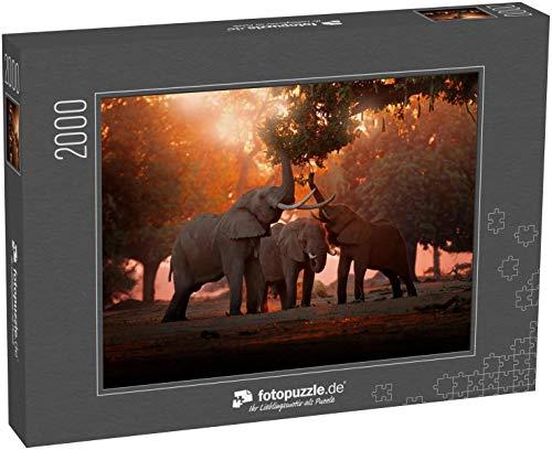 fotopuzzle.de Puzzle 2000 Teile Elefant ernährt Sich von einem Baumzweig Elefant im Mana Pools NP, Simbabwe in Afrika Großes Tier im Alten Wald