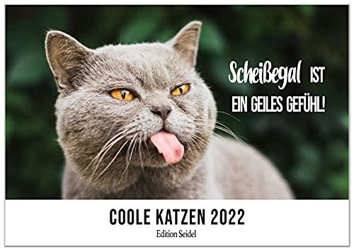 Edition Seidel coole Katzen mit Sprüchen Premium Kalender 2022 DIN A3 Wandkalender Katzenkalender