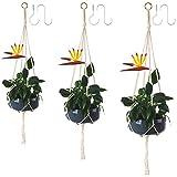 SShero Indoor Hanging Planters- 3 Pack...