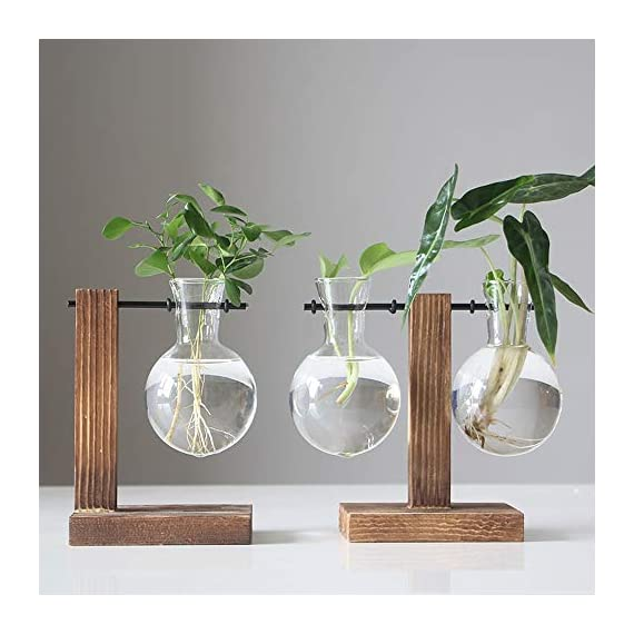 Water Planting Glass Vase,Clear Glass Vase Hanging Plant Terrarium with Retro Solid Wooden Stand for Hydroponics Plants… 2 ♚MATERIAL-Wooden+Glass.Great for floral arrangement, home decoration as well as various gift ideas ♚ DESIGN - Vintage design,DIY Planter with mini bulb shape vase in wooden stand. Smooth surface, good permeability, beautiful style ♚DECORATION- Fill with small plants,goldfish,or other decorative objects like beach sand and shells you collected and use as an eye-catching decorative accent for any space. Ideal for home, office, garden, wedding or holidays as a decoration.