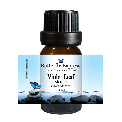Violet Leaf Absolute Essential Oil 5ml - 100% Pure by Butterfly Express