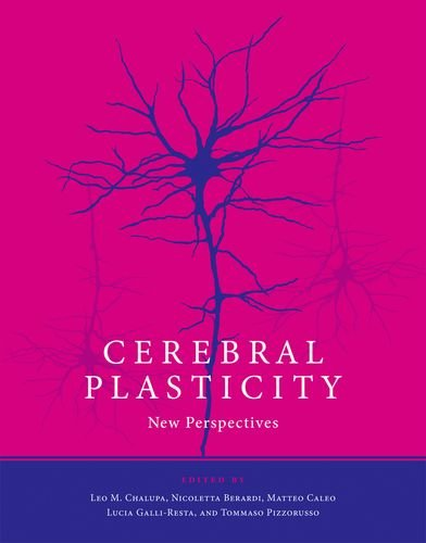Cerebral Plasticity: New Perspectives