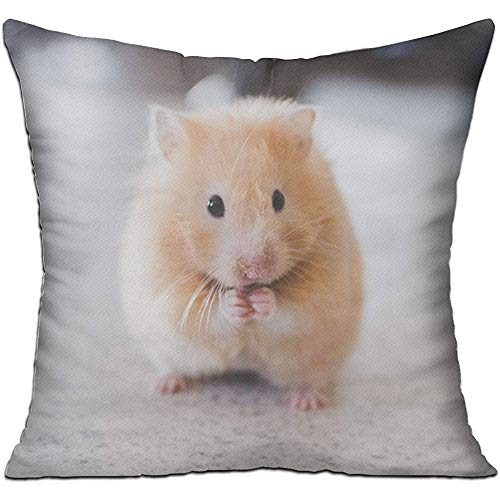Jupsero Fundas de Almohada Fundas de cojín de Moda Lindo hámster roedor único para sofá decoración Fundas de Almohada 18 x 18 Pulgadas