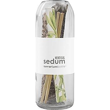 Terrarium Wine Bottle/Vertical Sedum