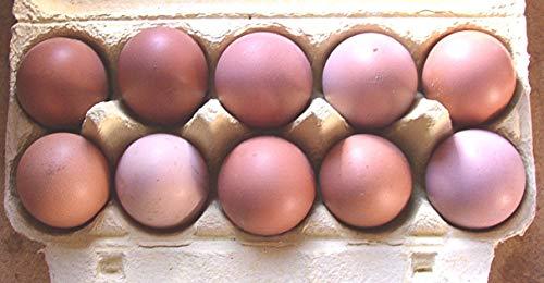 10+2 Hühner-Eier aus Freiland Haltung, reich an Omega 3 , direkt vom Bauernhof mit Kräuter Fütterung, tages-frische Delikatesse aus der Altmark, auch als Bruteier geeignet