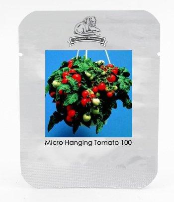 Micro-Rouge Suspendre Graines Tomate cerise, Paquet professionnel, 100 graines / Pack, tomates sur Little 8 'Plantes' Grown dans votre fenêtre