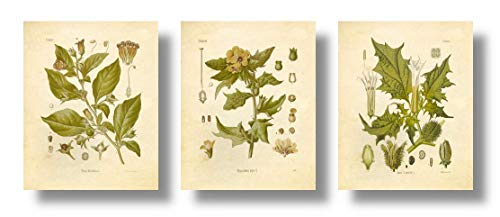 Botanical Prints Vintage Wall Art Magical Herbalism Witchcraft Herbs