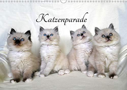 Katzenparade (Wandkalender 2021 DIN A3 quer)