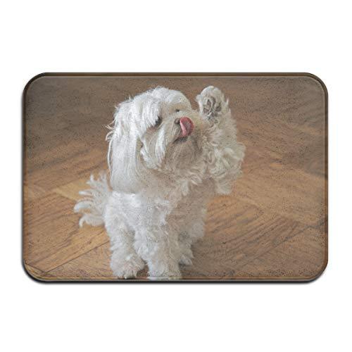 Pengyong Gummimatte mit niedlichem Malteser-Hund, für die Haustür, Veranda, Garage, großer Durchfluss, Eingangsteppich, Standardteppich, 60 x 40 cm