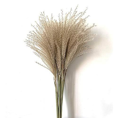 SSSSY 40 stuks pampasgras decoratieve gedroogde bloemen natuurlijke planten gedroogd decoratie boeket handgesponnen rieten mand zeegras huwelijk
