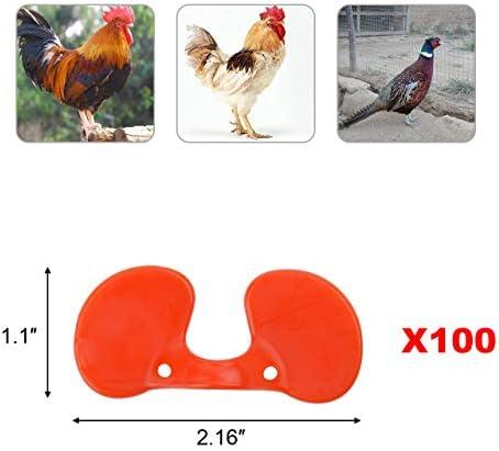 Chicken wearing glasses _image1