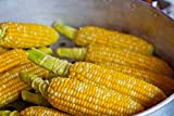 Delectable Bi Colored Corn Seeds Heirloom Open Pollinated Zea Mays M3 (40 Seeds, or 1/4 oz)