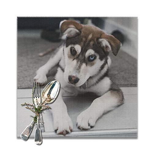 Houity de Husky hond leggen op het tapijt in de buurt van de trappen wasbaar zacht voor keuken diner tafel matPlacemats, gemakkelijk te reinigen handig opvouwbare opslag Placemat 12x12 Inch Set van 6