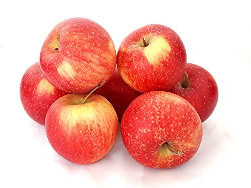 Äpfel Pinova aus Deutschland/Bodensee süß-säuerlicher Apfel saftig fest 1-10 KG (10)