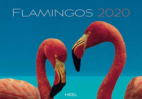 Flamingos 2020: Eleganz in Rosa