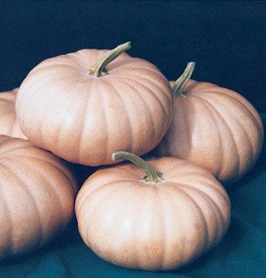 David's Garden Seeds Pumpkin Long Island Cheese 2255 (Orange) 25 Non-GMO, Heirloom Seeds