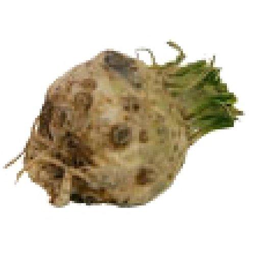 Sellerieknollen (1 kg) - Bio