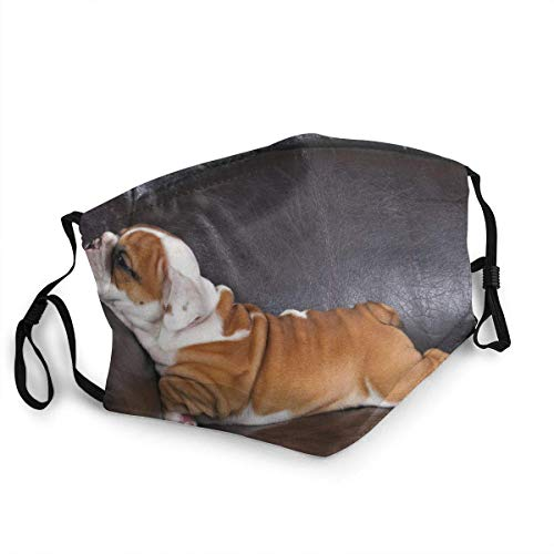 Mundschutz Gesichtsschutz Englischer Bulldoggen-Welpe, der auf Wildtier-Hund der schwarzen Tiere entspannt Sturmhaube Gesichtsschal Mundschal Wiederverwendbarer Staubschutz mit 2 Filtern