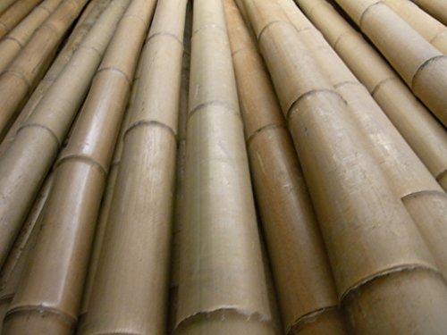 10 x Bambusrohr Bambusstange Bambushalm Bambus Bambusrohre 10 x 4-5 x 2 m / 40-50 mm