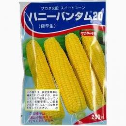 とうもろこし 種 【 ハニーバンダム20 】 種子 小袋(約200粒)