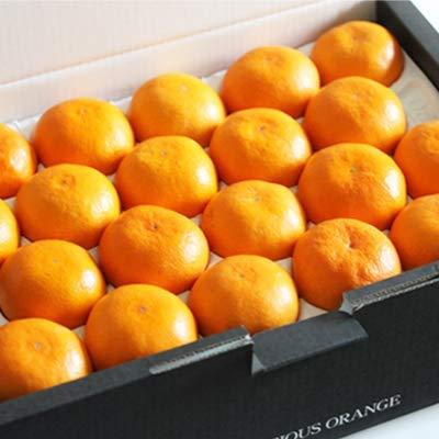 「贈答温室みかんS5」贈答品 愛媛産温室みかんSサイズ 約5kg ハウスみかん フルーツ 果物 通販