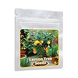Graines de Mini citronnier - 10 pcs/sac - cultivable comme bonsaï ou arbre
