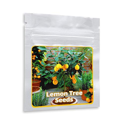 Mini Zitronenbaum Samen - 10 Stück/Pack - Zitrone - Citrus - Bonsai geeignet