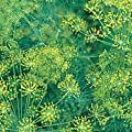 Dill Bouquet Great Garden Herb Seeds By Seed Kingdom