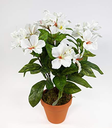 Seidenblumen Roß Hibiskus 40cm weiß-Creme im Topf ZF künstliche Pflanzen künstlicher Eibisch Kunstblumen Kunstpflanzen