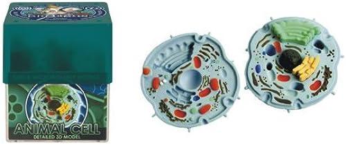 respuestas rápidas Ein-O Ein-O Ein-O Science BioSigns Animal Cell by Ein-O Science  colores increíbles