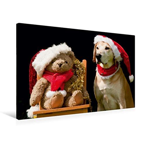 Calvendo Premium Textil-Leinwand 75 cm x 50 cm quer, Frohe Weihnachten!   Wandbild, Bild auf Keilrahmen, Fertigbild auf echter Leinwand, Leinwanddruck: Azawakh-Ridgeback mit Teddy Tiere Tiere