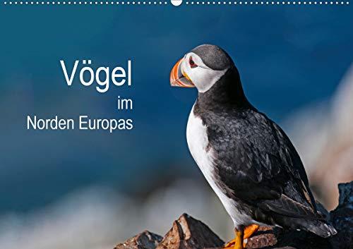 Vögel im Norden Europas (Wandkalender 2021 DIN A2 quer)