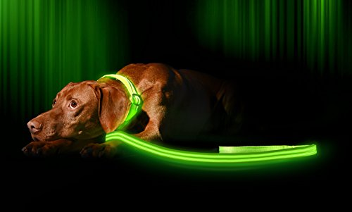 Illumiseen LED Dog Leash - USB Rechargeable - Your Dog Will Be More Visible & Safe - 6 Colors (Red, Blue, Green, Pink, Orange & Yellow) - Perfect to Use with Our Matching Collar (4 Feet, Green)