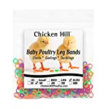 Baby Poultry Chick Leg Bands Size 6 XLarge (100)
