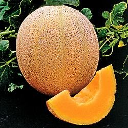 Seed Kingdom Cantaloupe Hales Best Jumbo Melon Heirloom Vegetable Seeds (400...