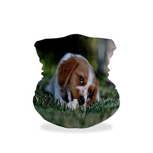 Bandanas para la cara Deportes & Casual Headwear lindo perro que se pone en la cama cuello polaina, envoltura para la cabeza, pasamontañas, forro para casco para niños, mujeres y hombres, verde