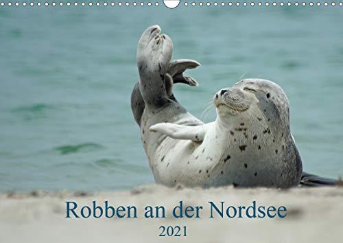 Robben an der Nordsee (Wandkalender 2021 DIN A3 quer)