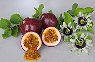 panama red passionfruit