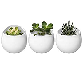 Mkono 4 Inch Wall Mounted Planter Round Ceramic Hanging Plant Holder Decorative Flower Display Vase Succulent Pots for… 6 Unique Design: Round shape plant vase finished with matte white, its glazed apperance looks in modern. Minimalist style and elegant design add decorative touch to any home and office decor, to brighten up your living space with indoor plants. Great gift idea for plant lover! Multipurpose Use: Improved opening is large enough for planting small succulents, ball cactus, herbs, air plants, water plants, or artificial plants. Functional for storage small items, such as placing makeup brush, pencils, mark pen, tableware, or toiletries in different scenes. Versatile Wall Decor: A hole in the back allows to hang on wall displaying your favourite plants. As a wonderful wall decor, prefect for using at home, office, shop. Additional ornament for hanging in bedroom, living room, kitchen, restroom, or entryway.