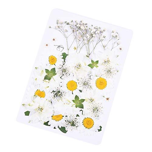 Daimay 36 stuks geperste bloemen, gemengde gedroogde bladeren, echte droogpers, gemengde natuurlijke drogers, voor kunst, knutselen, doe-het-zelf, hars, scrapbooking, handwerk, kaarten maken - stijl D nieuw