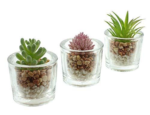 FRANK FLECHTWAREN Lot de 3 plantes grasses décoratives en verre